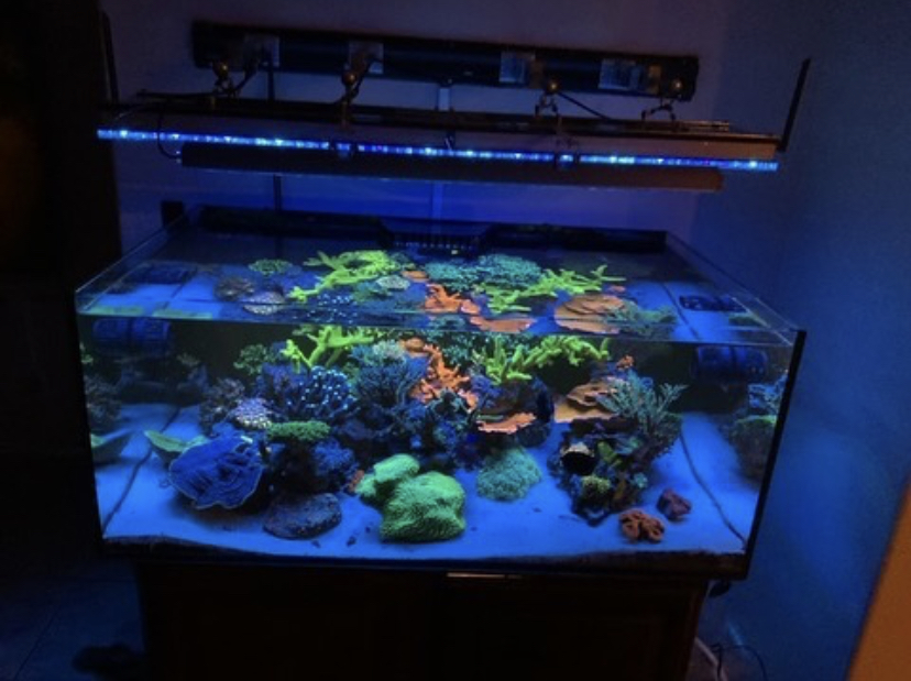 beste akvarium korall pop led belysning