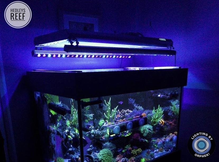 mejor iluminación LED de cultivo de coral 2021