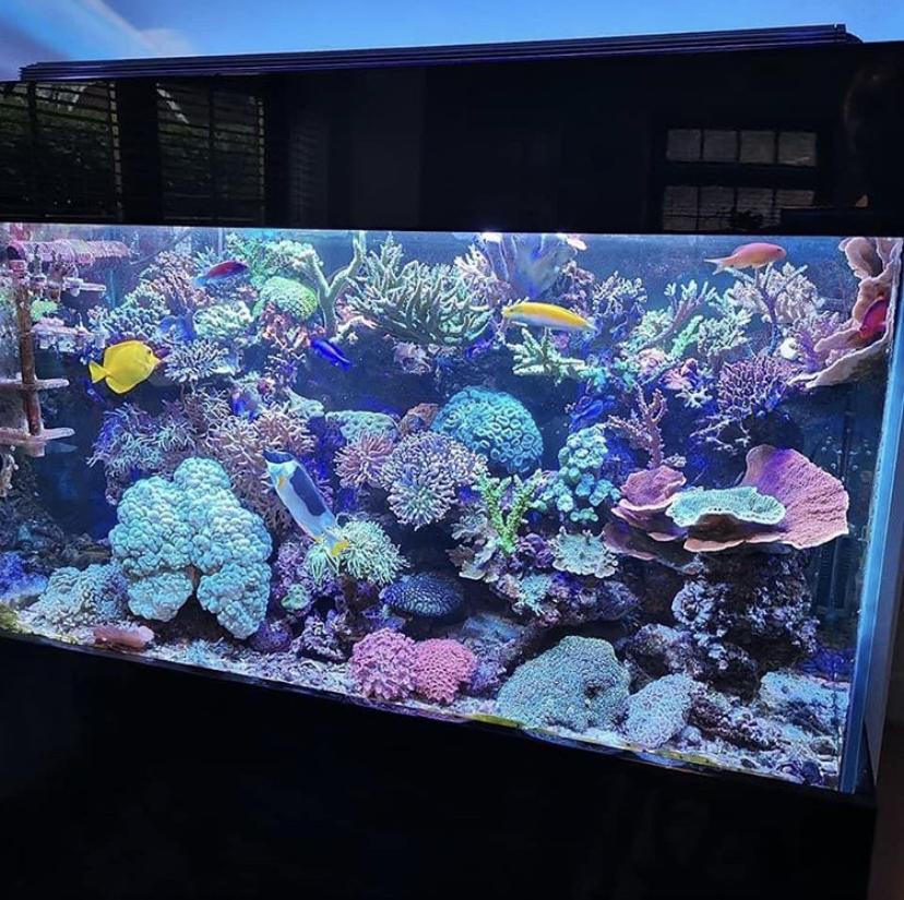 hermosa iluminación del acuario de coral