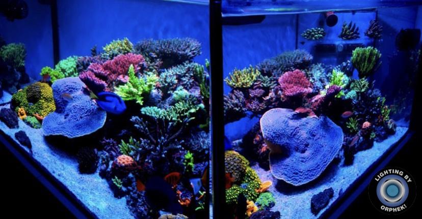 tangki karang terumbu lampu dipimpin terbaik