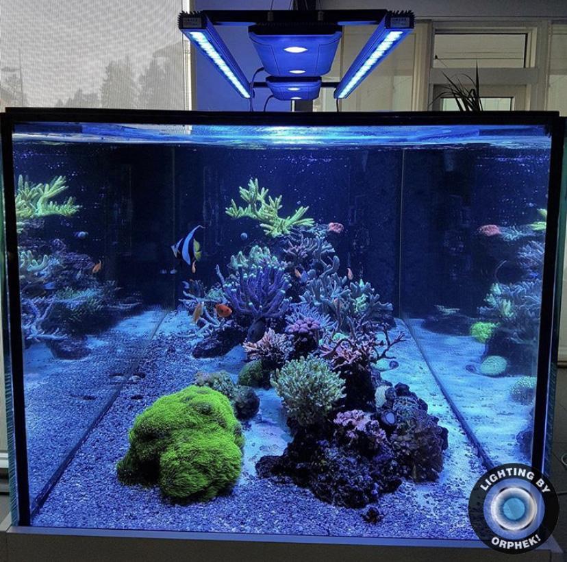 increíble iluminación del acuario de agua salada