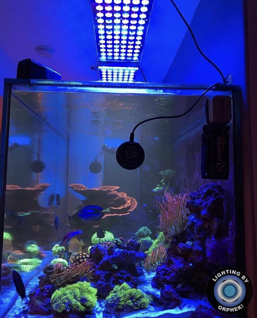 resif tuzlu su deniz akvaryumu