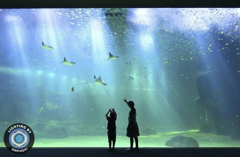 acuario más fuerte luz led amazonas 500 vatios