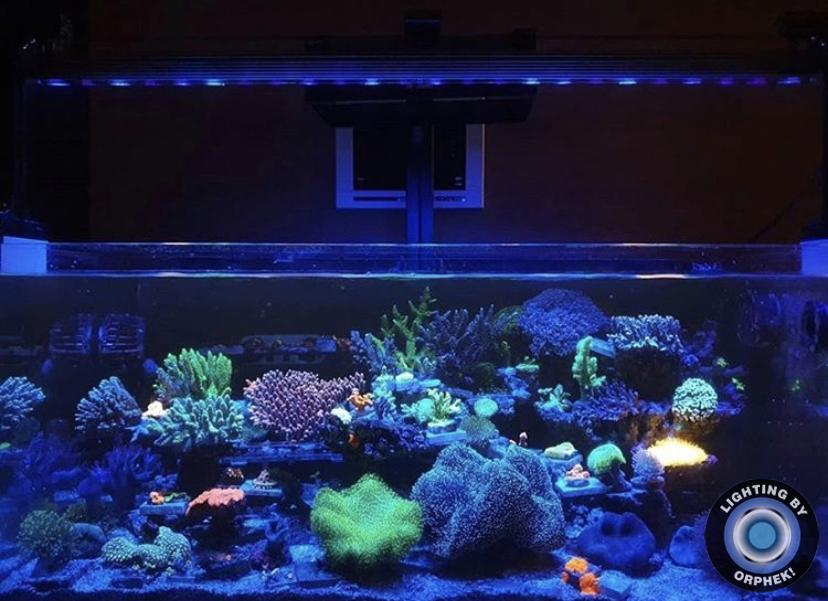 melhor auquarium coral levou luzes 2021