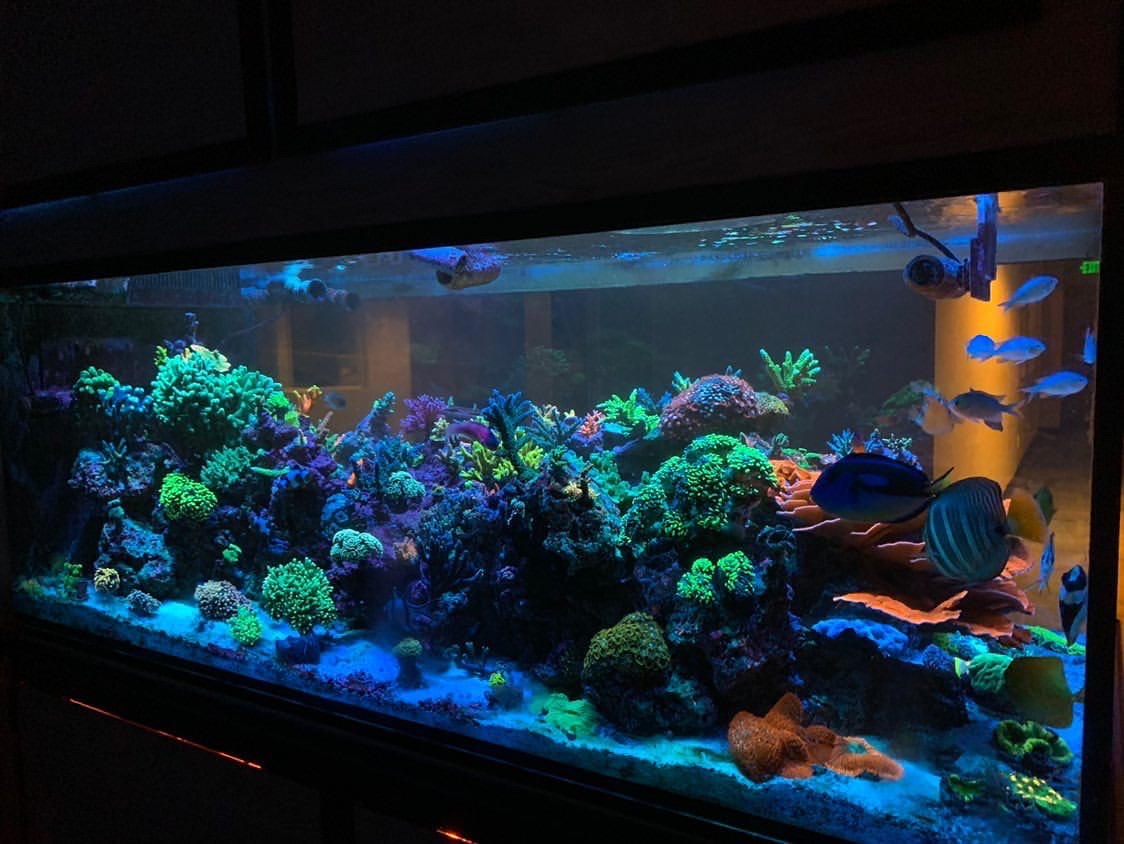 SPS dominante aquarium Blue Plus LED Bars voor kleurenpracht