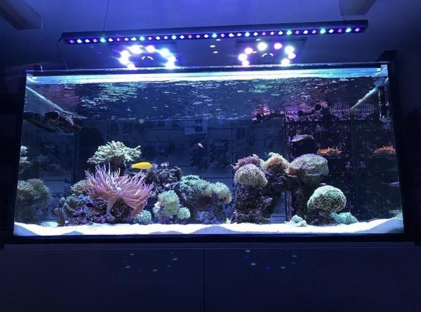 orphek лучший аквариум светодиодный бар
