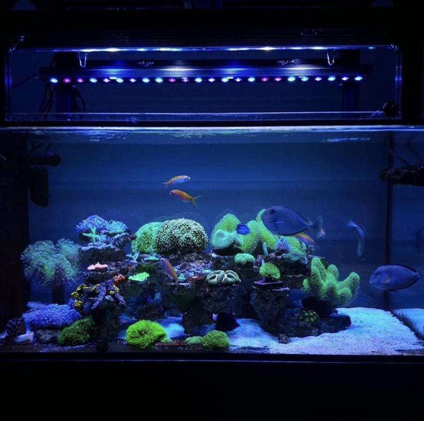 Лучшая светодиодная панель для аквариумов в 2021 году orphek
