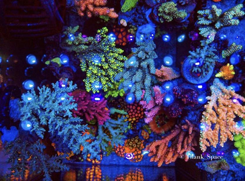 아름다운 산호 색 조명