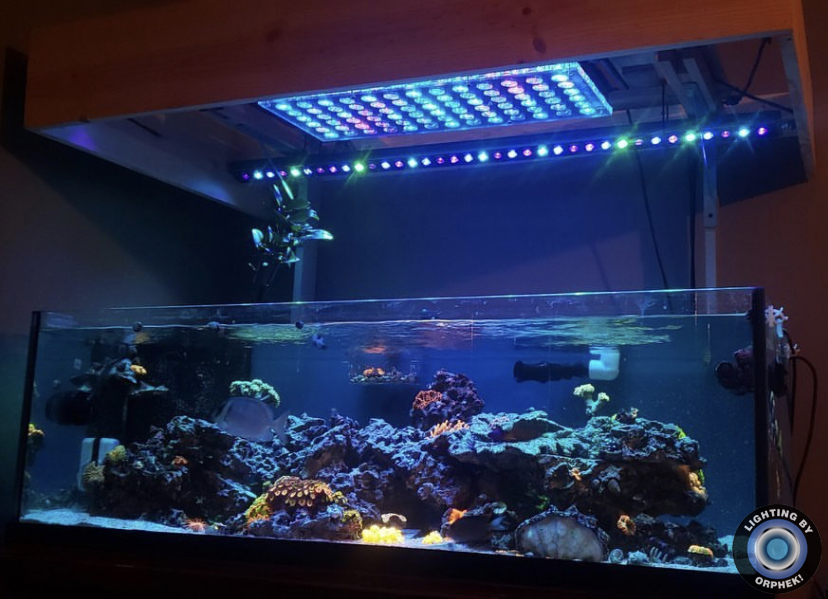 orphek atlantik v4로 놀라운 산호 팝