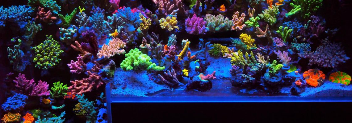 best-reef-aquarium-couleur