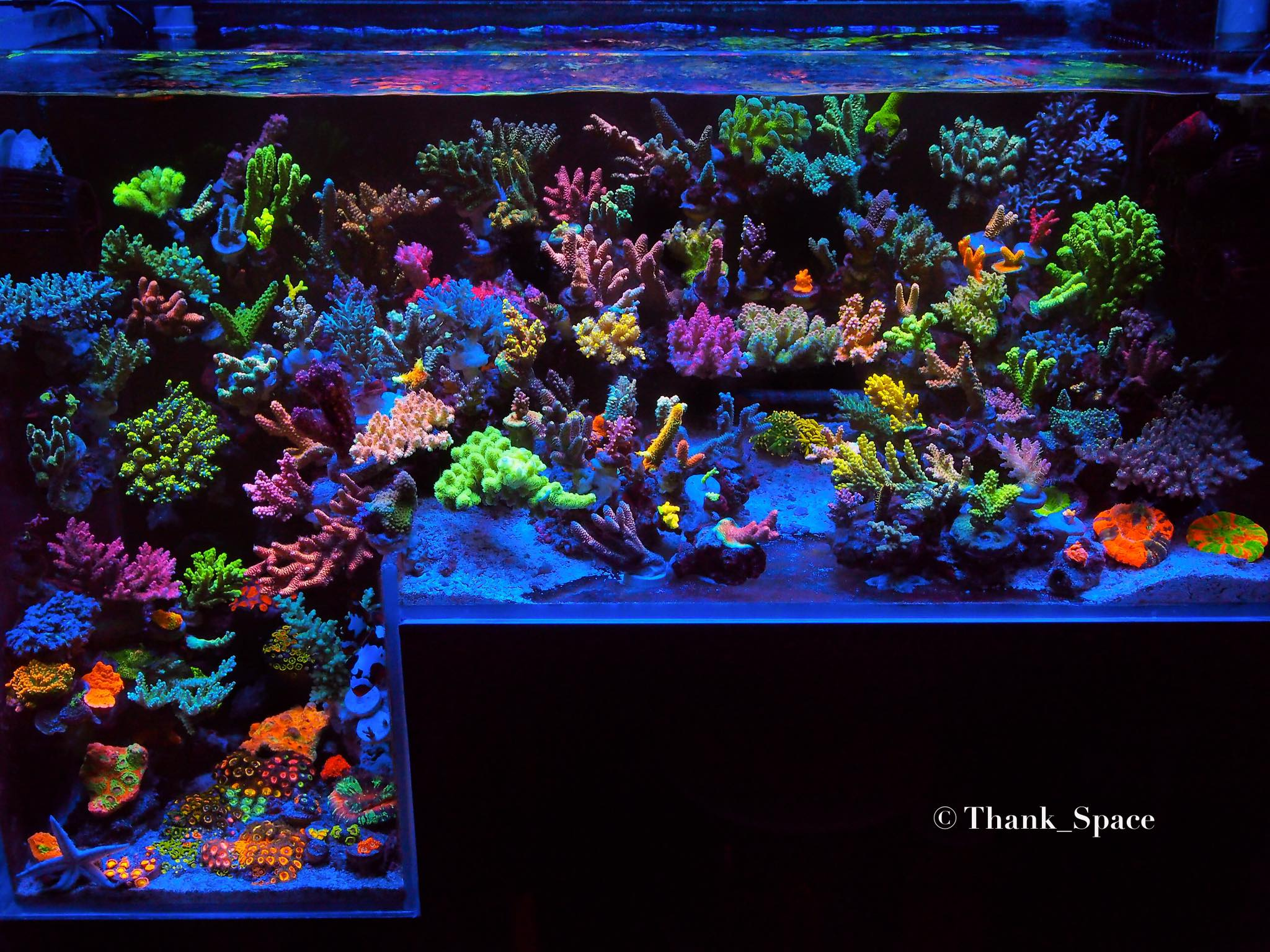 лучший цвет-рифовый аквариум