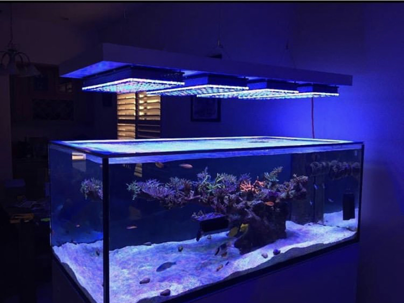 orphek_led_light_reef_Aquarium
