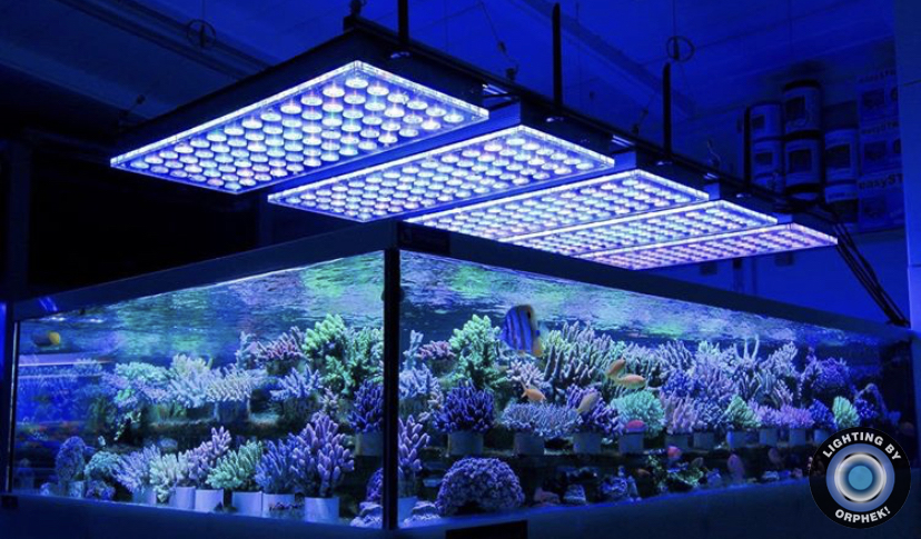 best_led_reef_aquarium_orphek