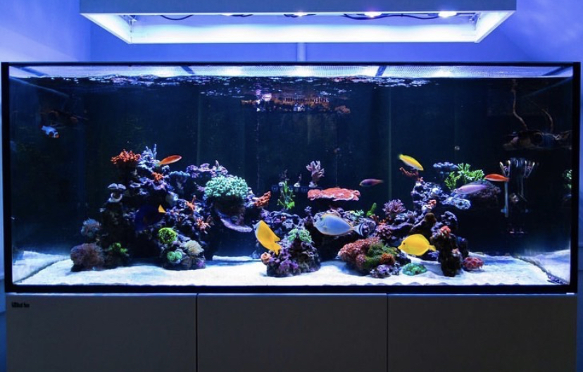 best_reef_aquarium_led_light