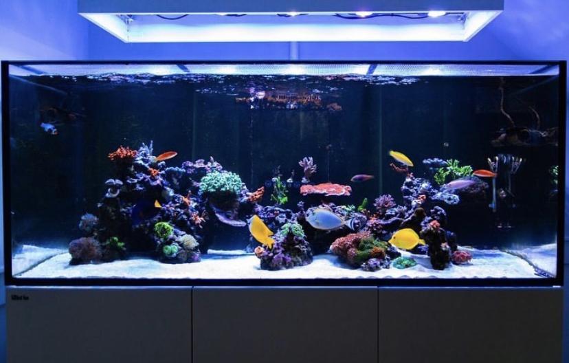 أفضل_إضاءة_حوض سمك_ليد