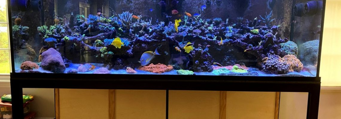 2021_best_reef_aquarium_LED_Osvjetljenje