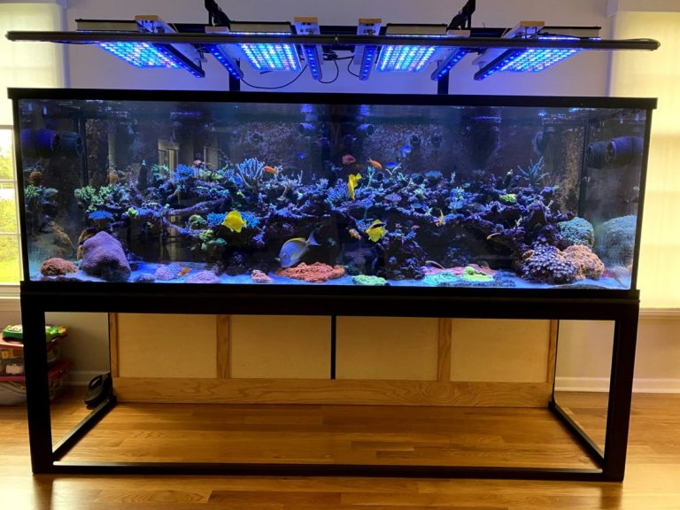 2021_best_reef_aquarium_LED_Lighting
