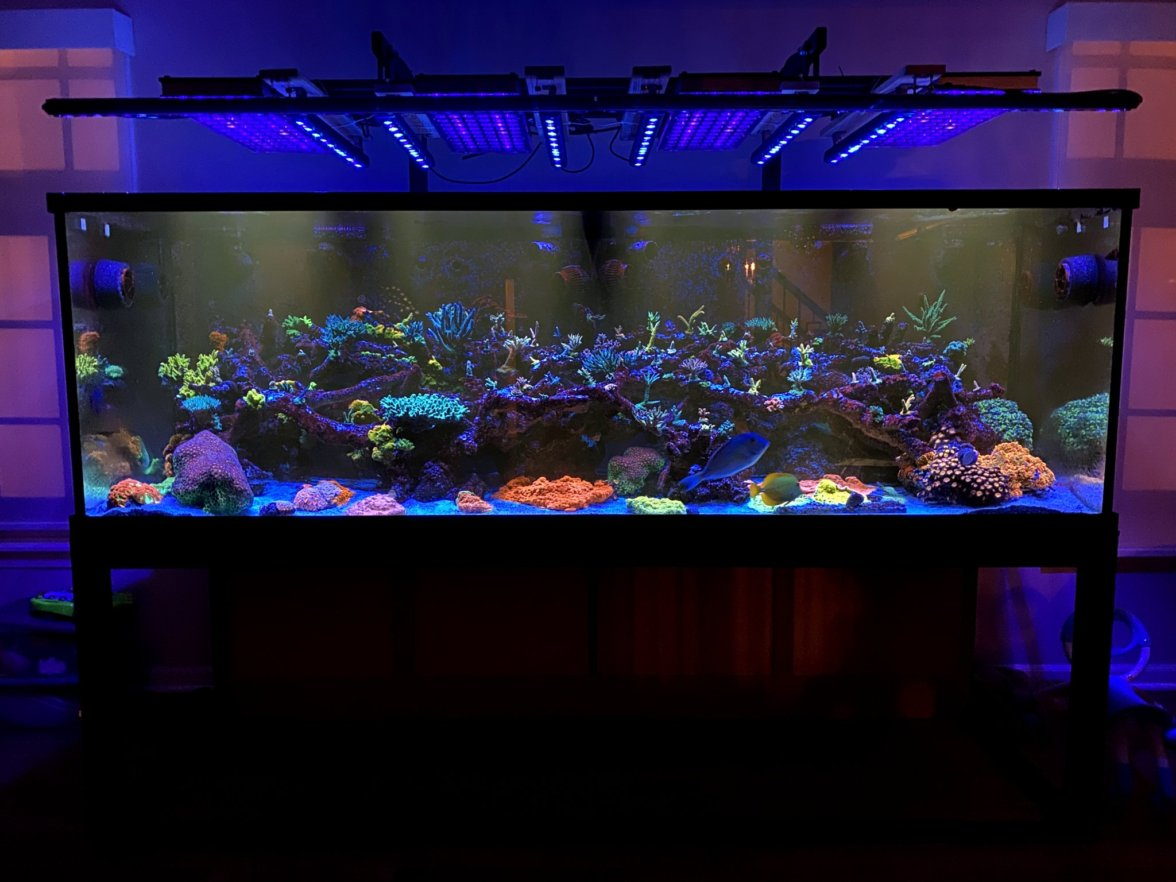 amazing_coral_pop_reef_led_lighting