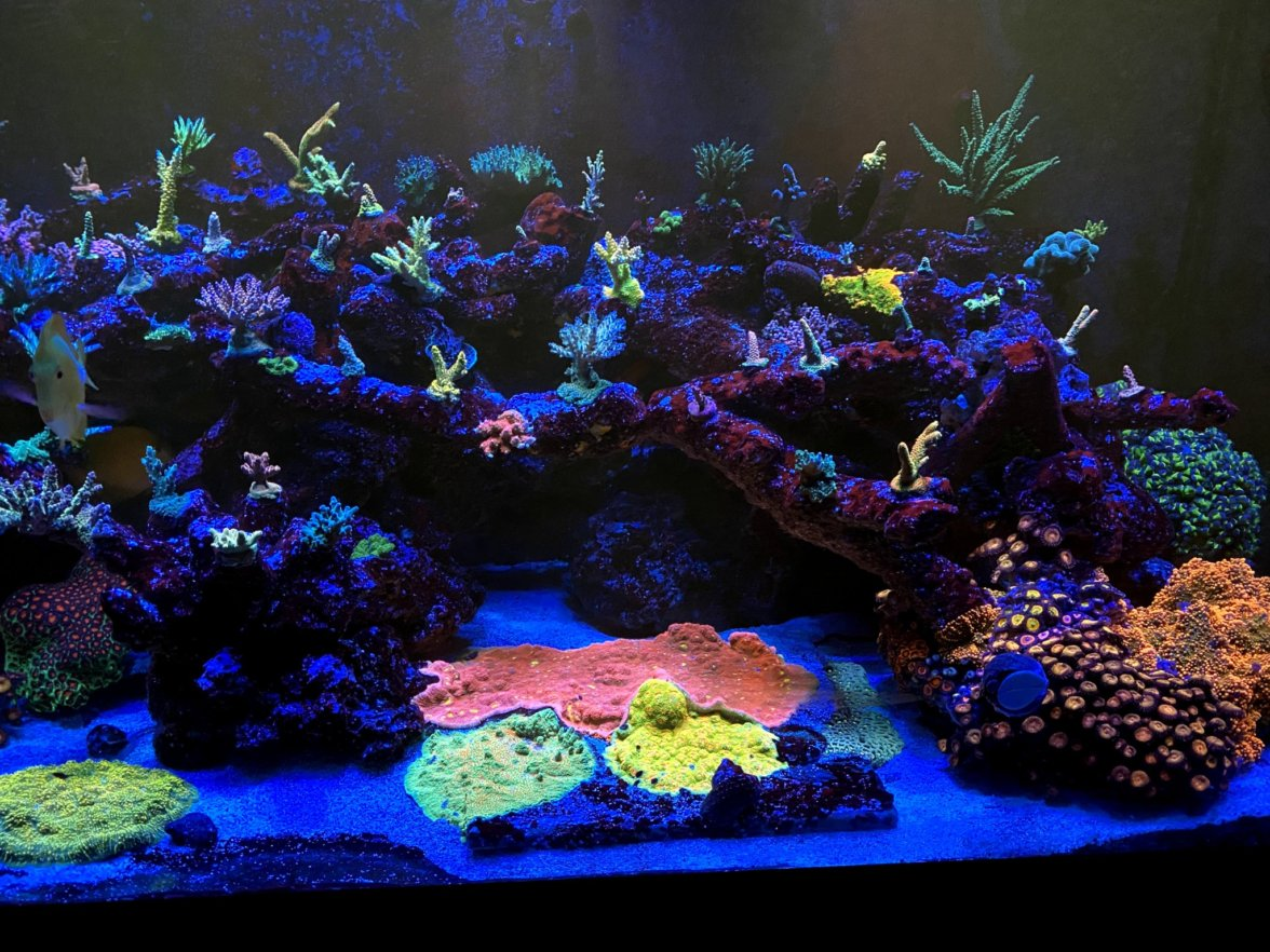 best_reef_led_light_2021