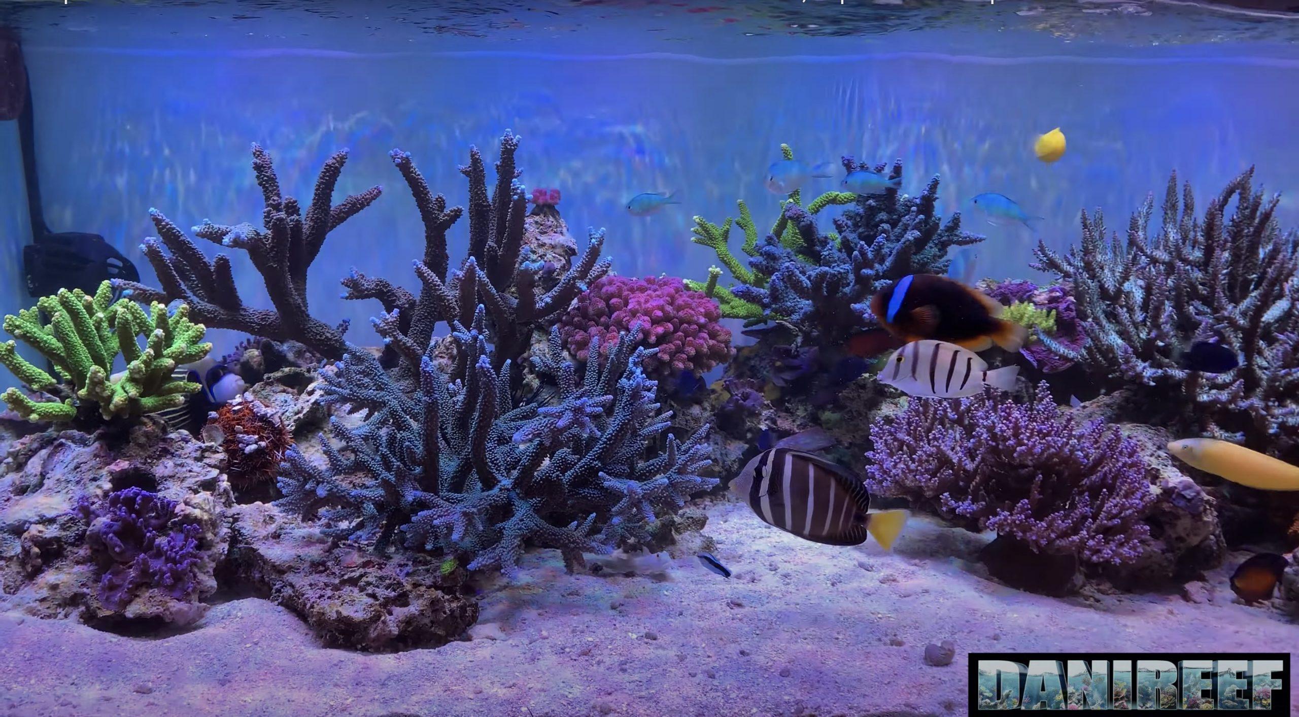 Reef aquarium sps corail orphek atlantik