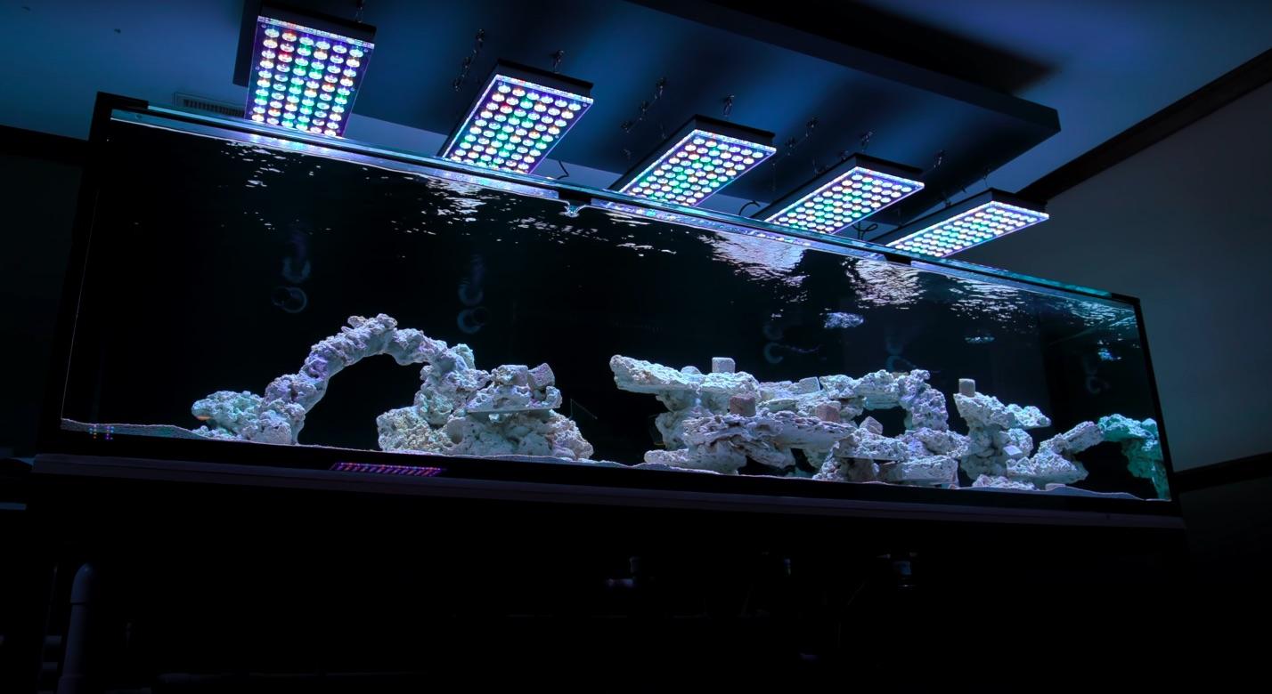 new_reef_tank_orphek_atlantik_led_light