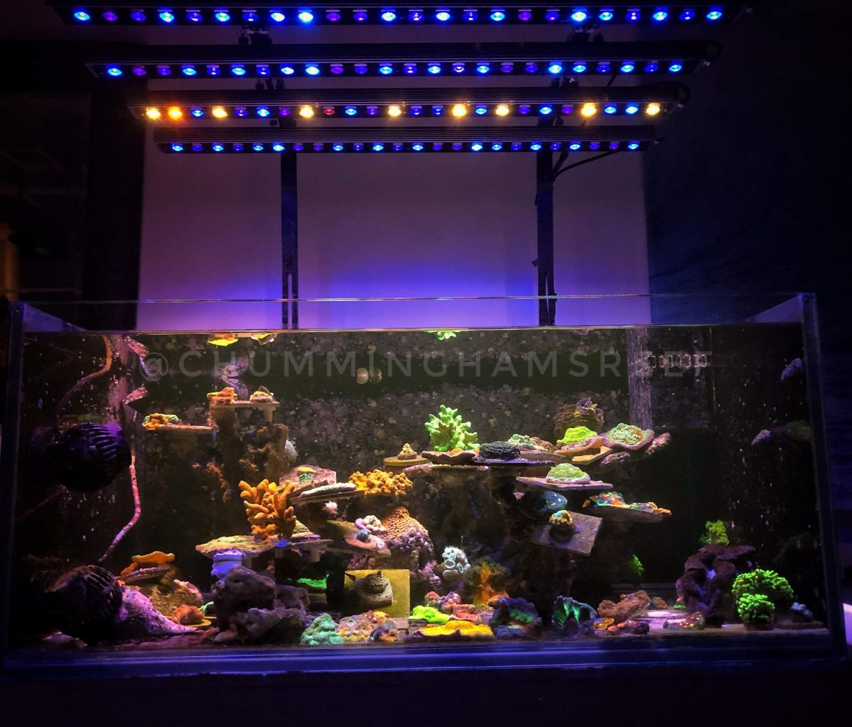 4 units of Orphek OR3 LED Bars Blue & Day Plus over reef tank