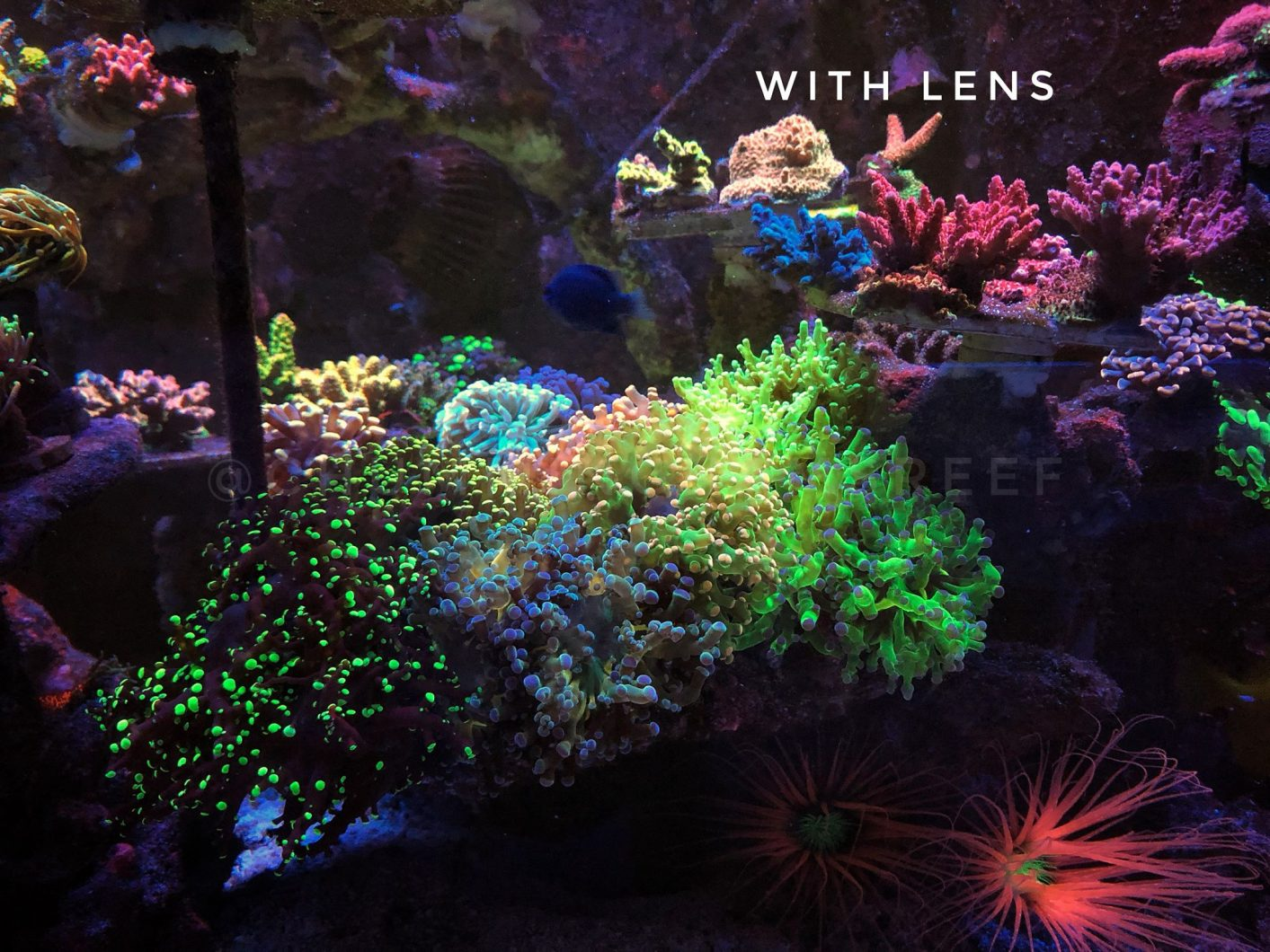 Reef Aquarium showcase with Orphek Coral Lens Kit
