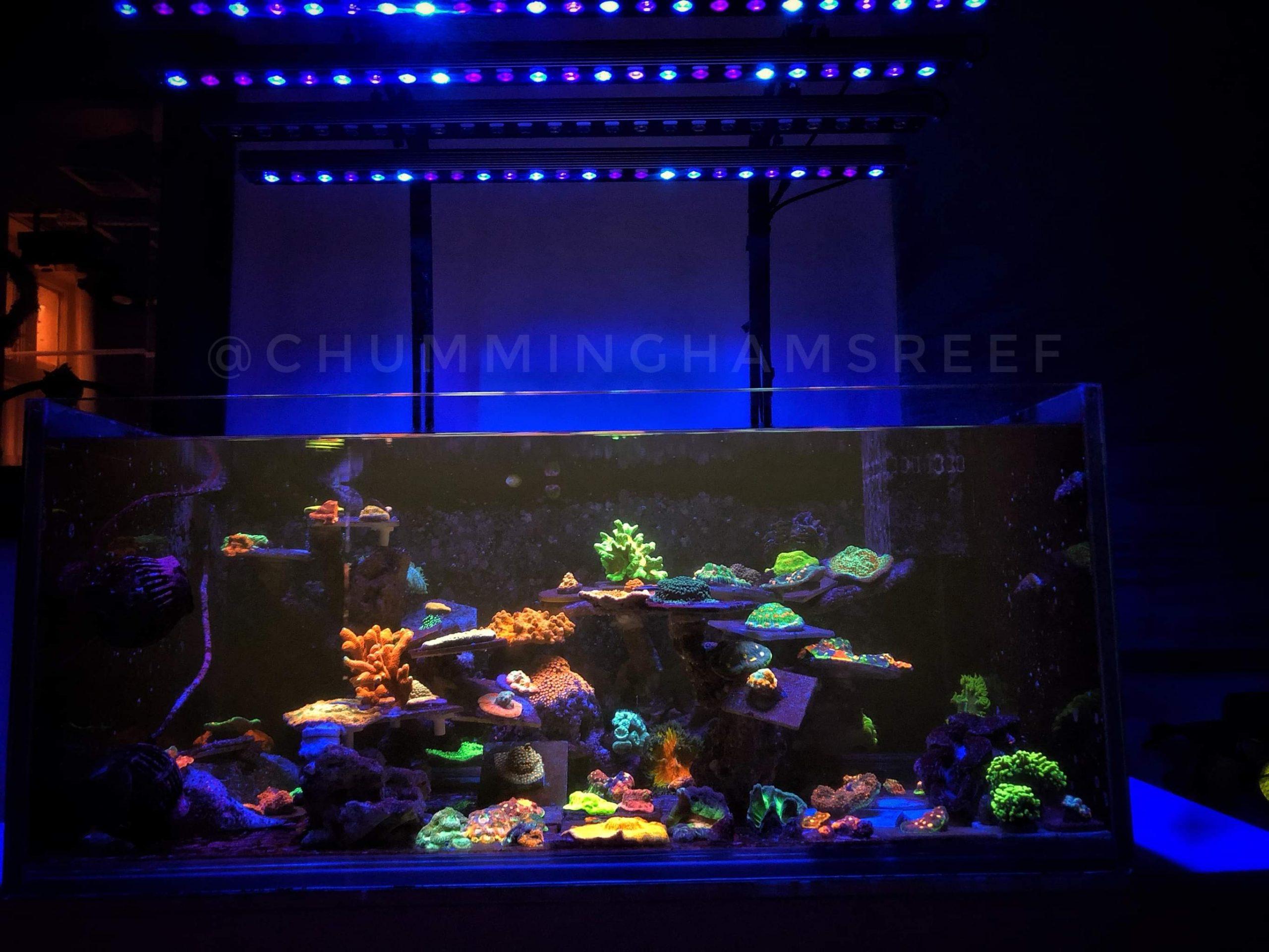 Tajna koraljnog popa s OR3, Ryana Cunninghama
