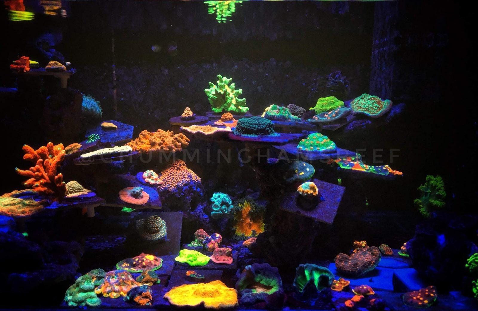 Mixed Corals