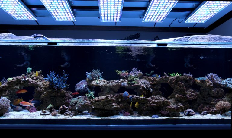 500G-reef-tank-with-Orphek-Atlantik-V4-LED-Light2