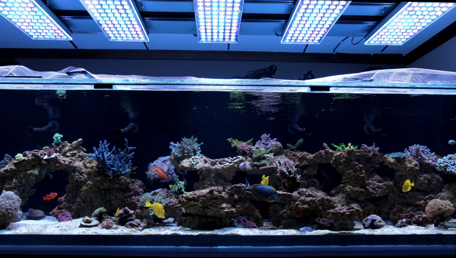 Best LED reef Aquarium for 2021