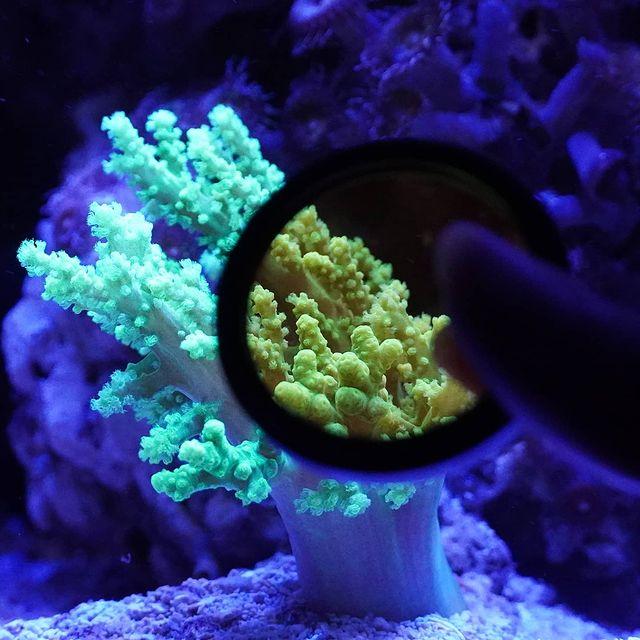 coral_lens_kit