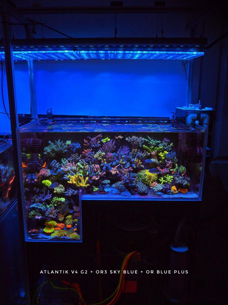 Best_LED_strip_reef_aquarium