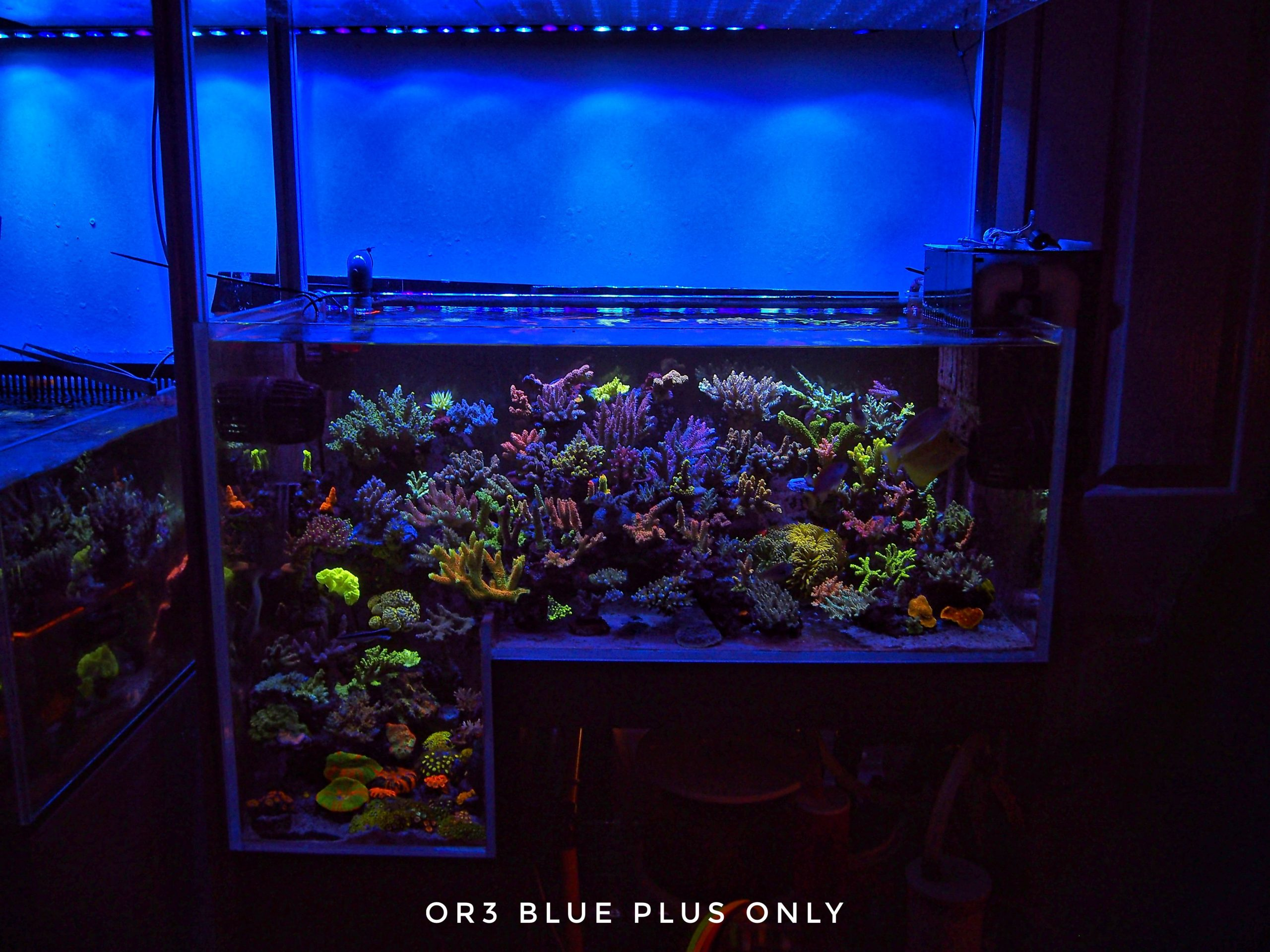 The wide blue spectrum of Orphek OR3 Blue Plus LED Bar