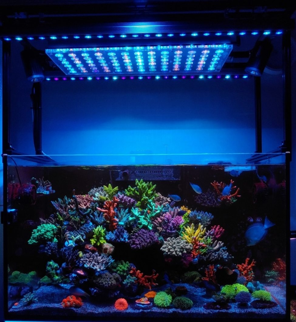 SPS_LPS_corals_Blue_Sky_OR3