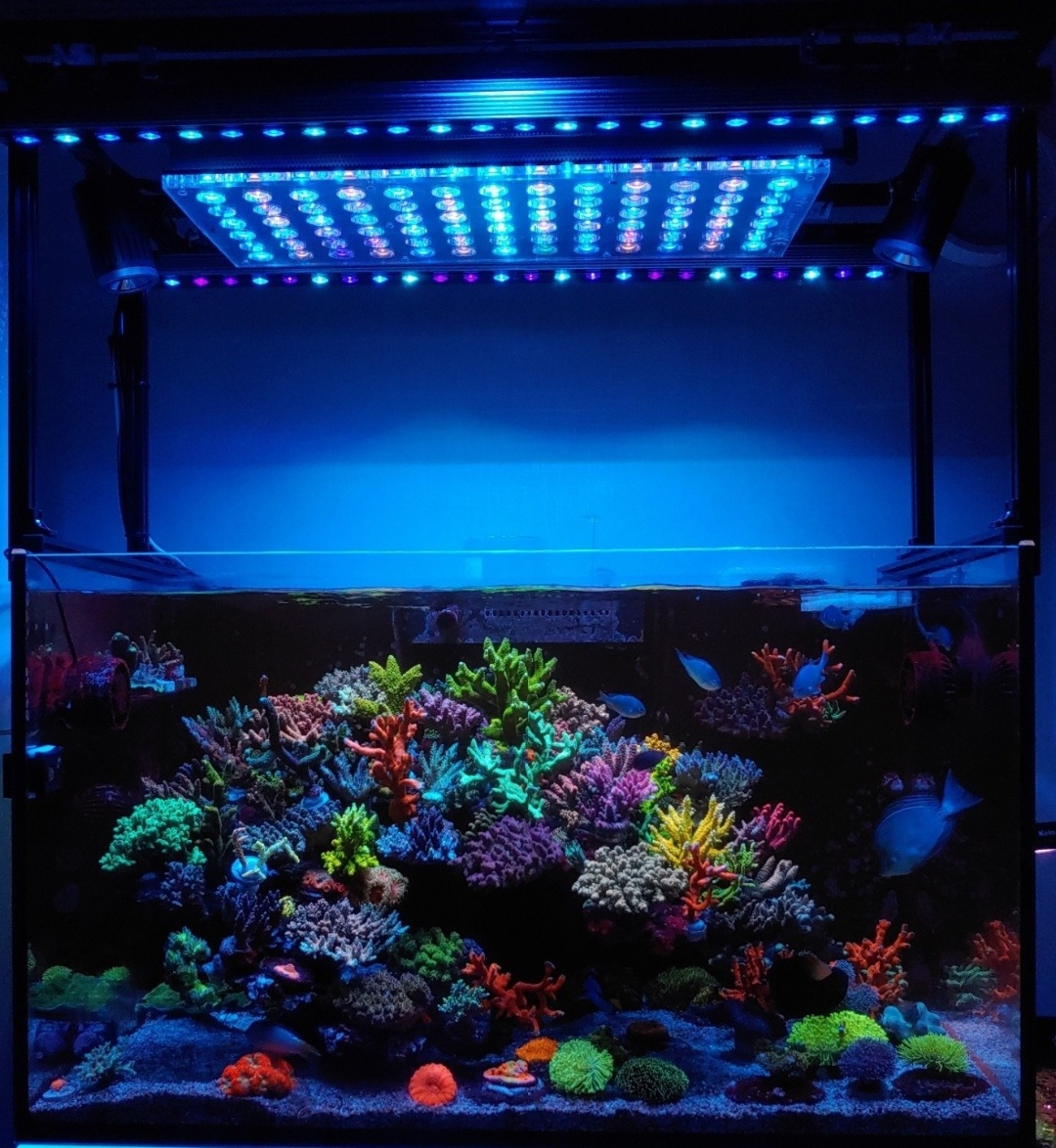 Orphek's Atlantik V4 avec barres LED pour aquarium OR3 Blue Sky Reef