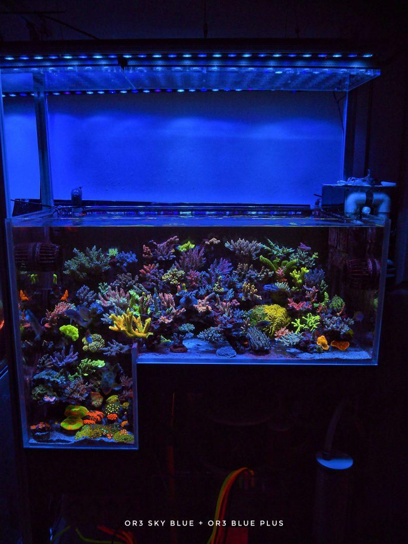 best_reef_aquarium_2022