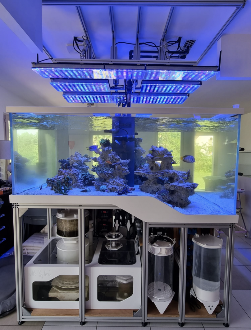 Orphek over French architect's reef tank