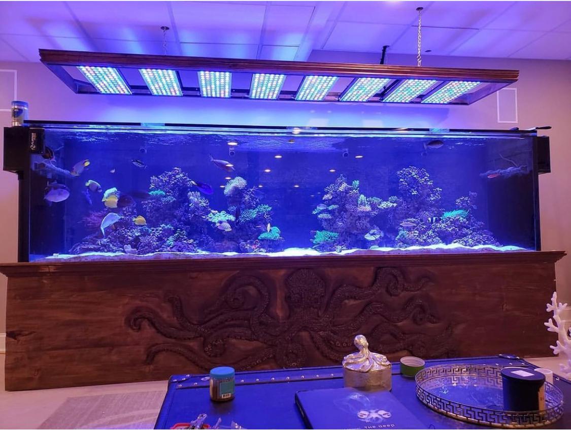 Massive 800 gallon reef tank