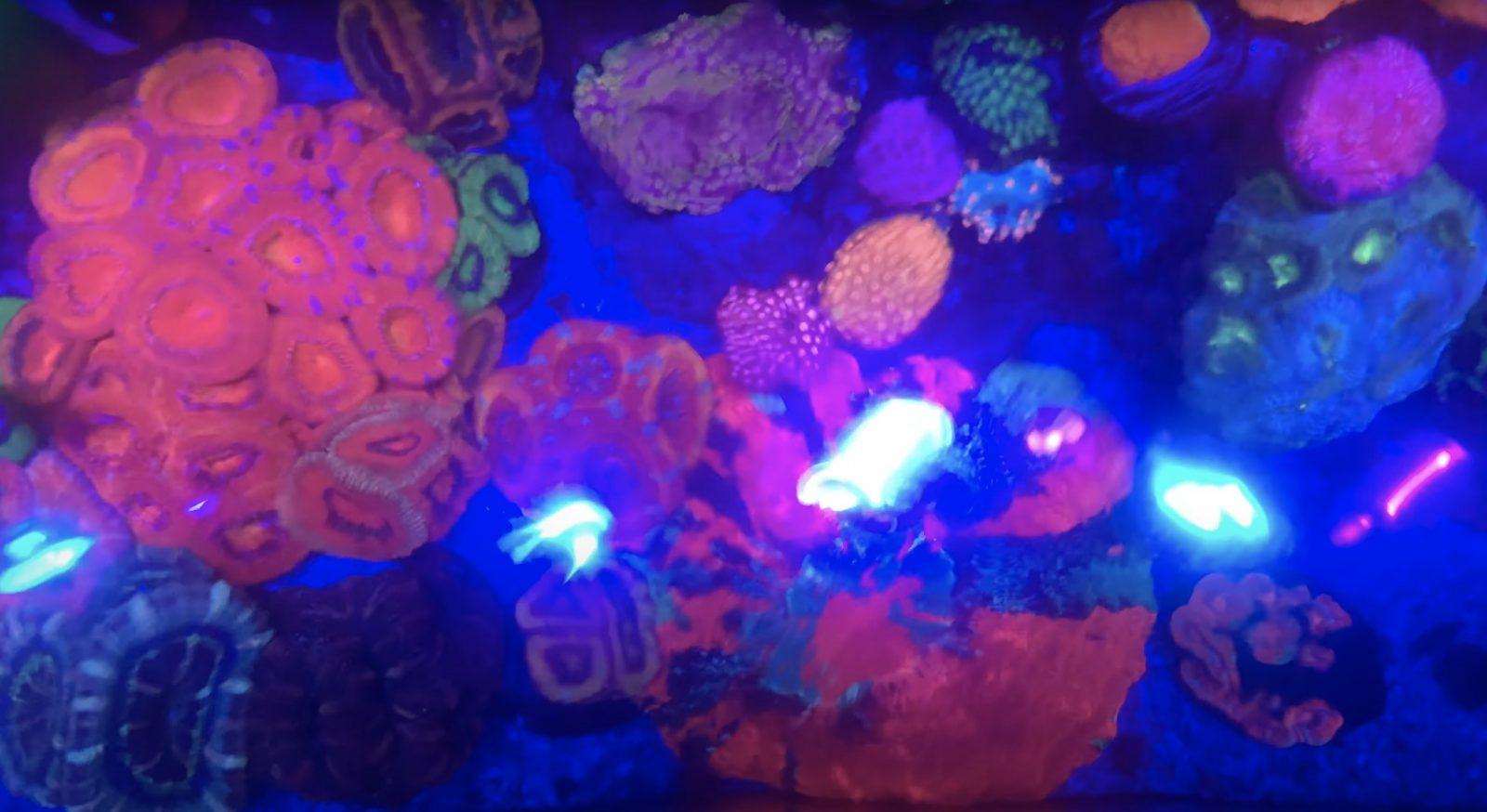 Korallenroter Pop unter der OR3-LED-Leiste