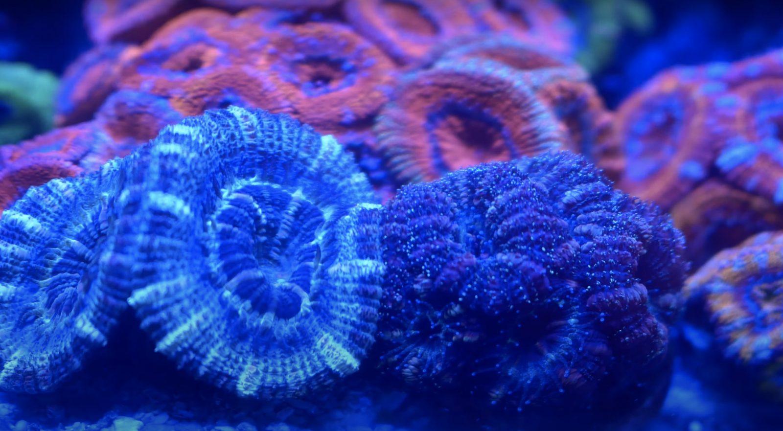 Korallen Nahaufnahme