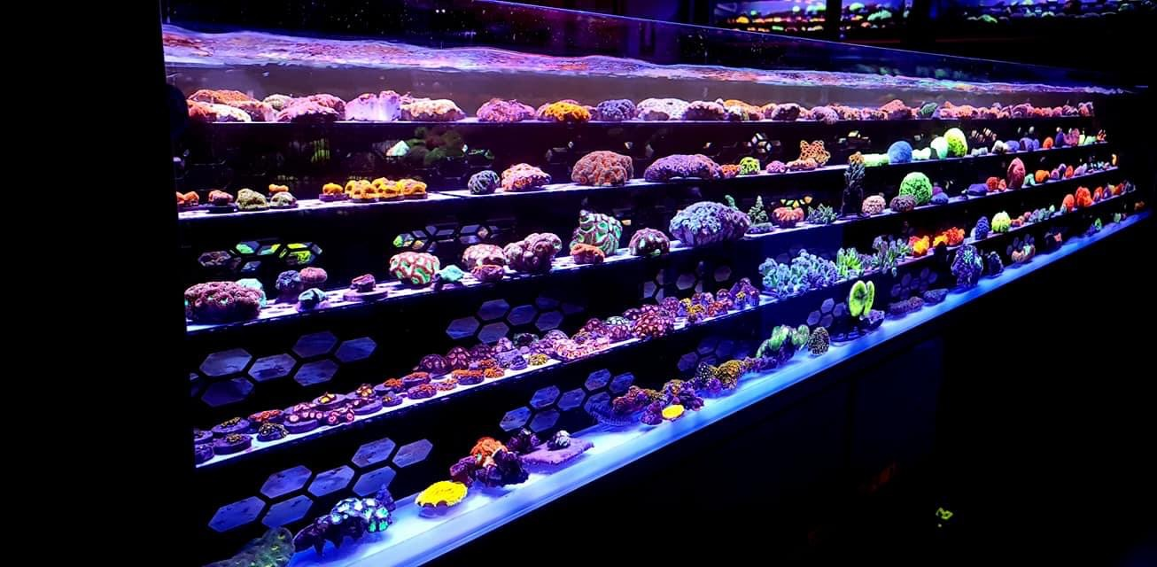 Orphek amazing reef frag aquarium LED layouts