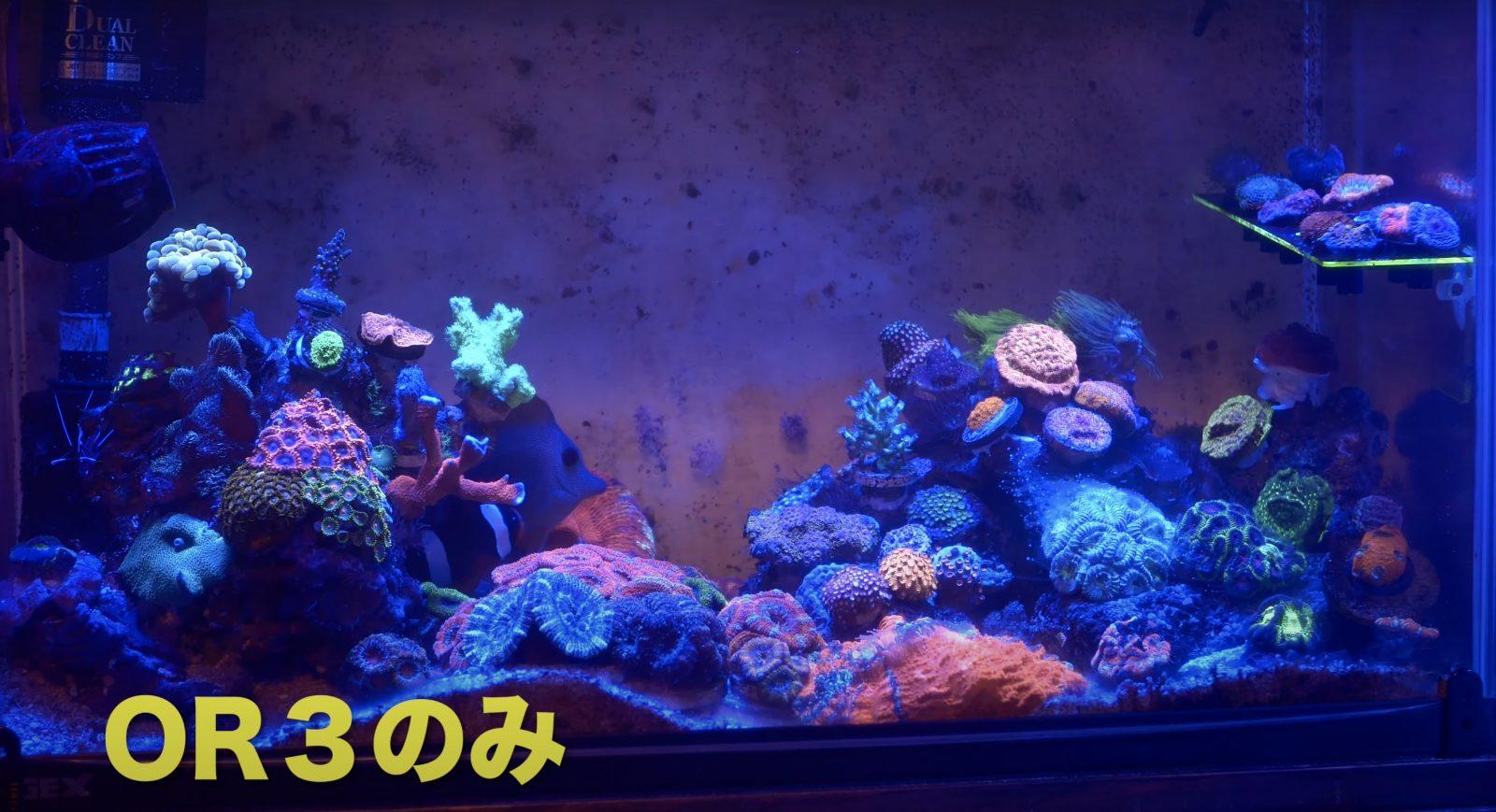 Riffaquarium unter Orphek OR3 LED Bar 60 cm