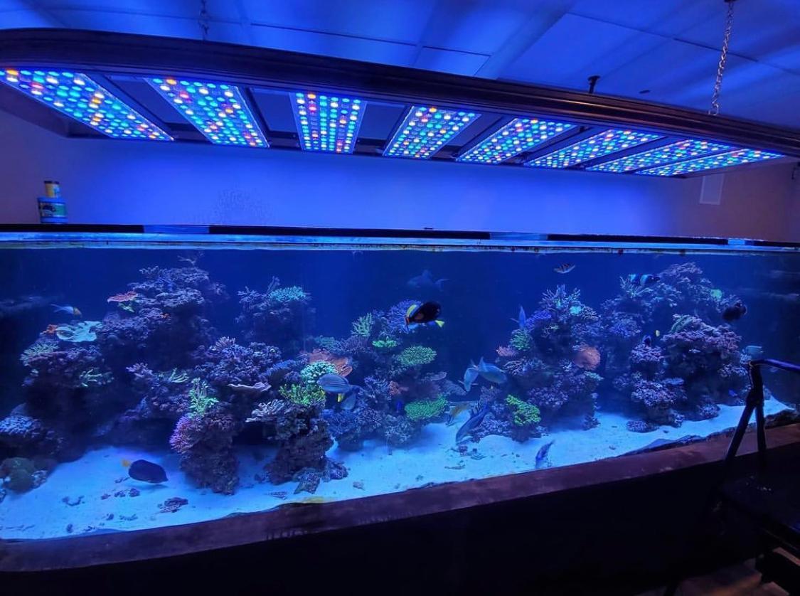 amazing reef aquarium LED layouts