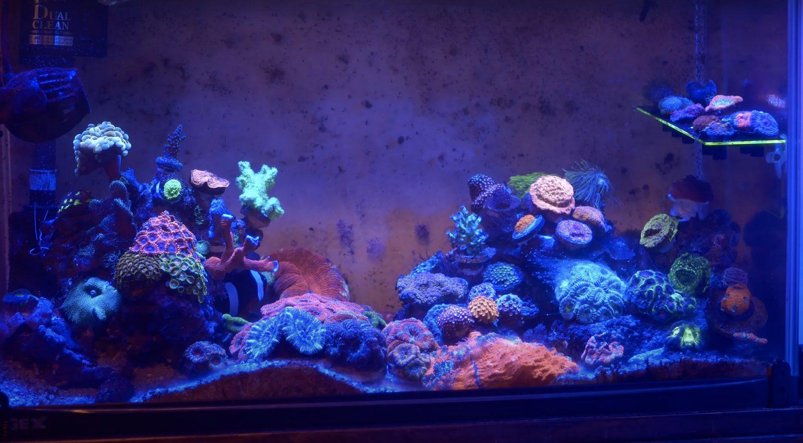 Korallen unter Orphek OR3 LED Bar 60 cm