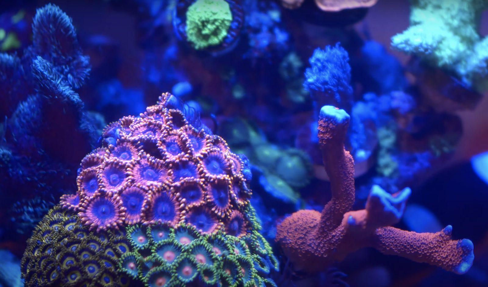 Korallen Farbe Pop Nahaufnahme Foto
