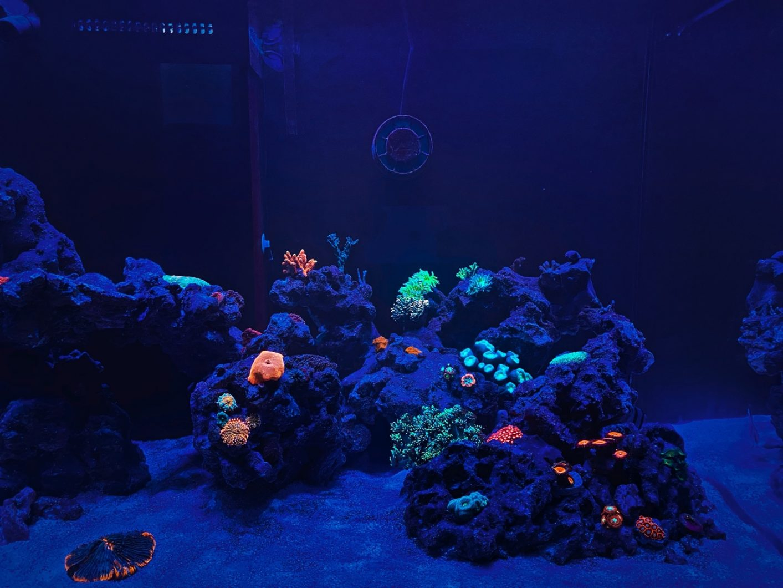 OR3_blue_plus_coral_pop