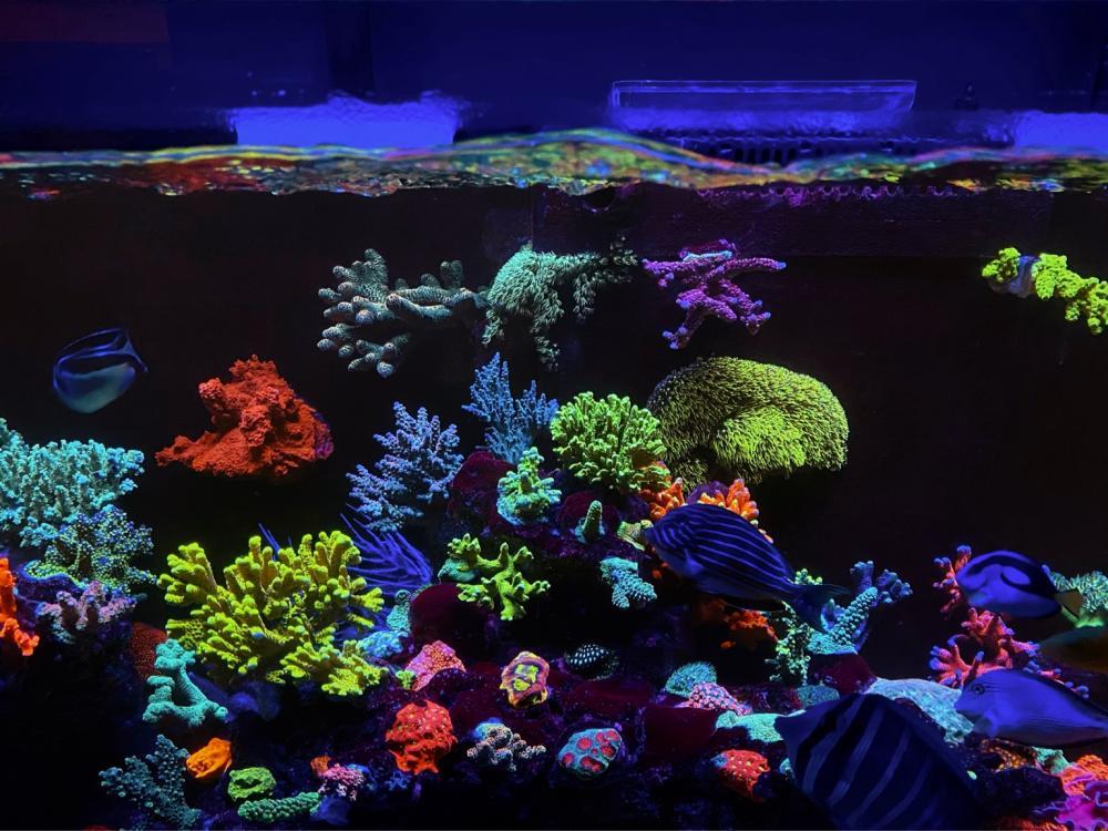 amazing reef aquarium coral