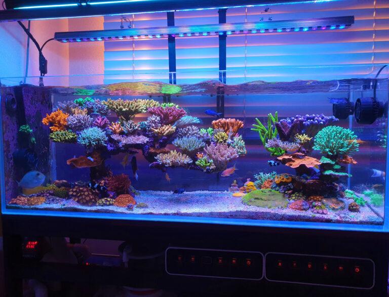 Increíble acuario de arrecife dominado por SPS de 110 galones iluminado por Atlantik V4 y OR3 Blue Plus