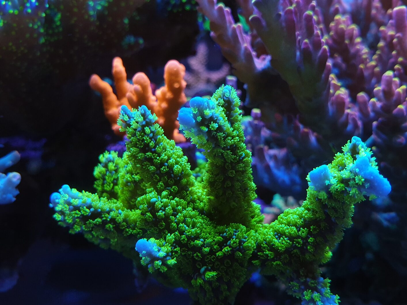 Check out this growing tips close-up!